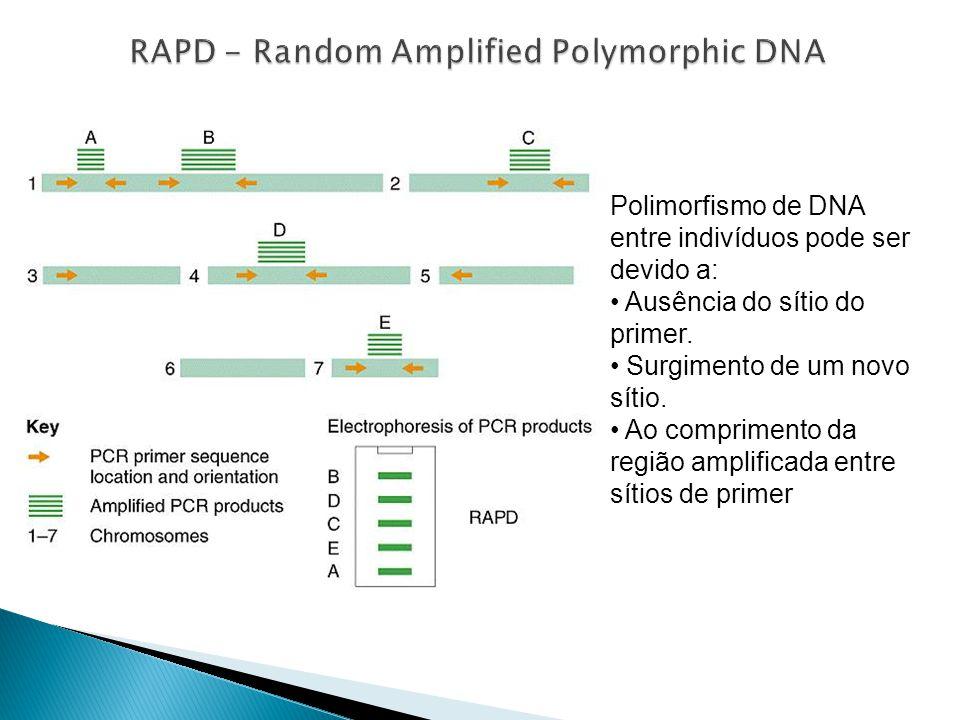 Polimorfismo de DNA entre indivíduos pode ser devido a: Ausência do sítio do primer.