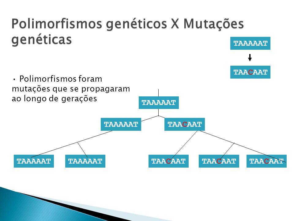 TAAAAAT TAACAAT TAAAAAT TAACAAT TAAAAATTAACAAT TAAAAAT Polimorfismos foram mutações que se propagaram ao longo de gerações Polimorfismos genéticos X Mutações genéticas