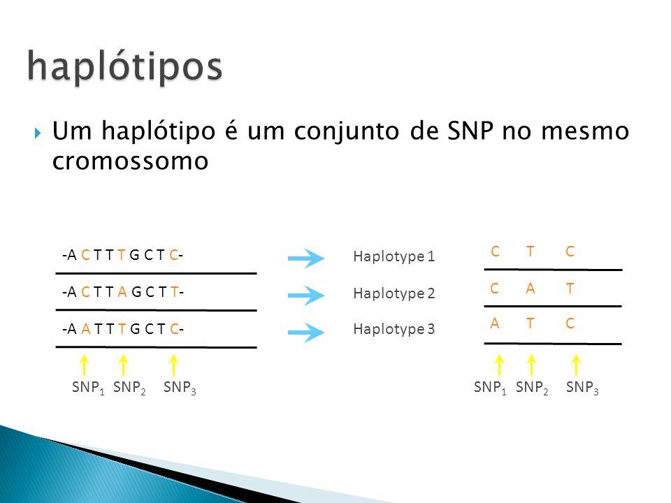 Um haplótipo é um conjunto de SNP no mesmo cromossomo SNP 1 SNP 2 SNP 3 -A C T T A G C T T- -A A T T T G C T C- -A C T T T G C T C- Haplotype 2 Haplotype 3 C A T A T C C T C Haplotype 1 SNP 1 SNP 2 SNP 3