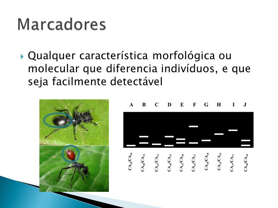Qualquer característica morfológica ou molecular que diferencia indivíduos, e que seja facilmente detectável