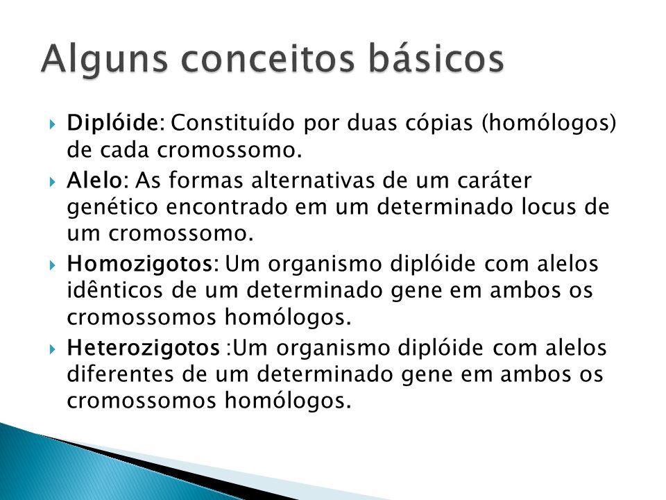 Diplóide: Constituído por duas cópias (homólogos) de cada cromossomo.