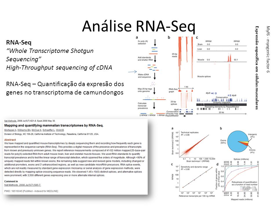 Análise RNA-Seq RNA-Seq Whole Transcriptome Shotgun Sequencing High-Throughput sequencing of cDNA RNA-Seq – Quantificação da expresão dos genes no tra