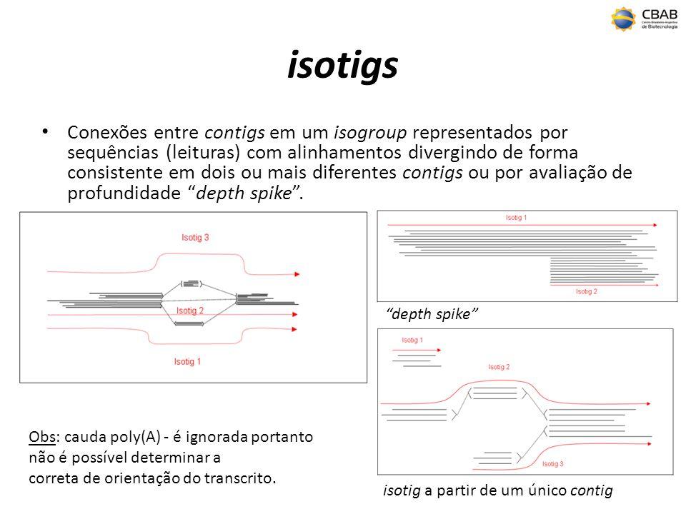 isotigs Conexões entre contigs em um isogroup representados por sequências (leituras) com alinhamentos divergindo de forma consistente em dois ou mais diferentes contigs ou por avaliação de profundidade depth spike.