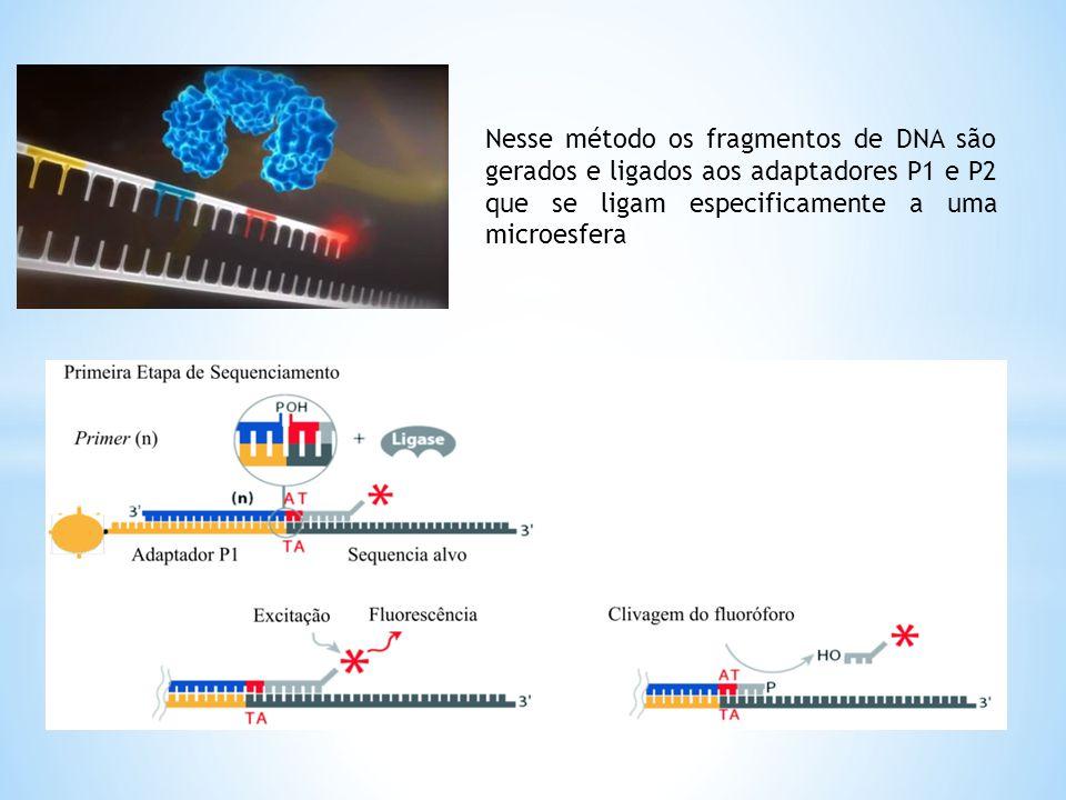 Nesse método os fragmentos de DNA são gerados e ligados aos adaptadores P1 e P2 que se ligam especificamente a uma microesfera