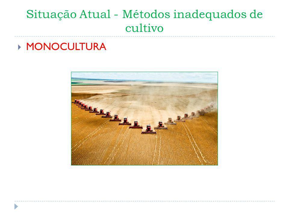 Situação Atual - Métodos inadequados de cultivo MONOCULTURA