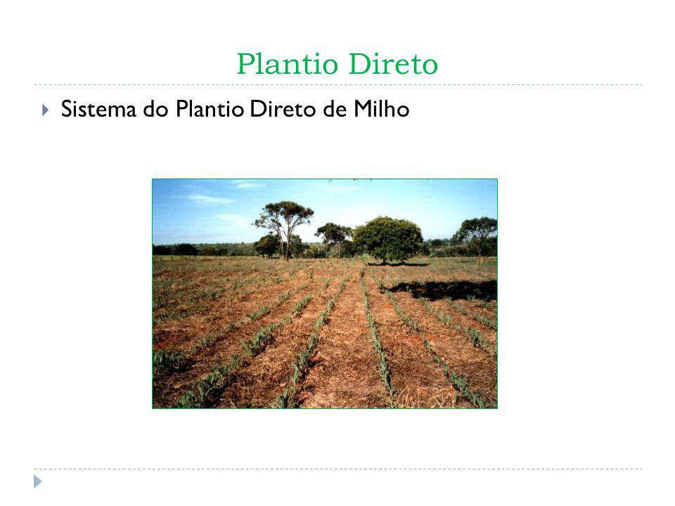 Plantio Direto Sistema do Plantio Direto de Milho Fig. 2 Sistema de Plantio direto de milho