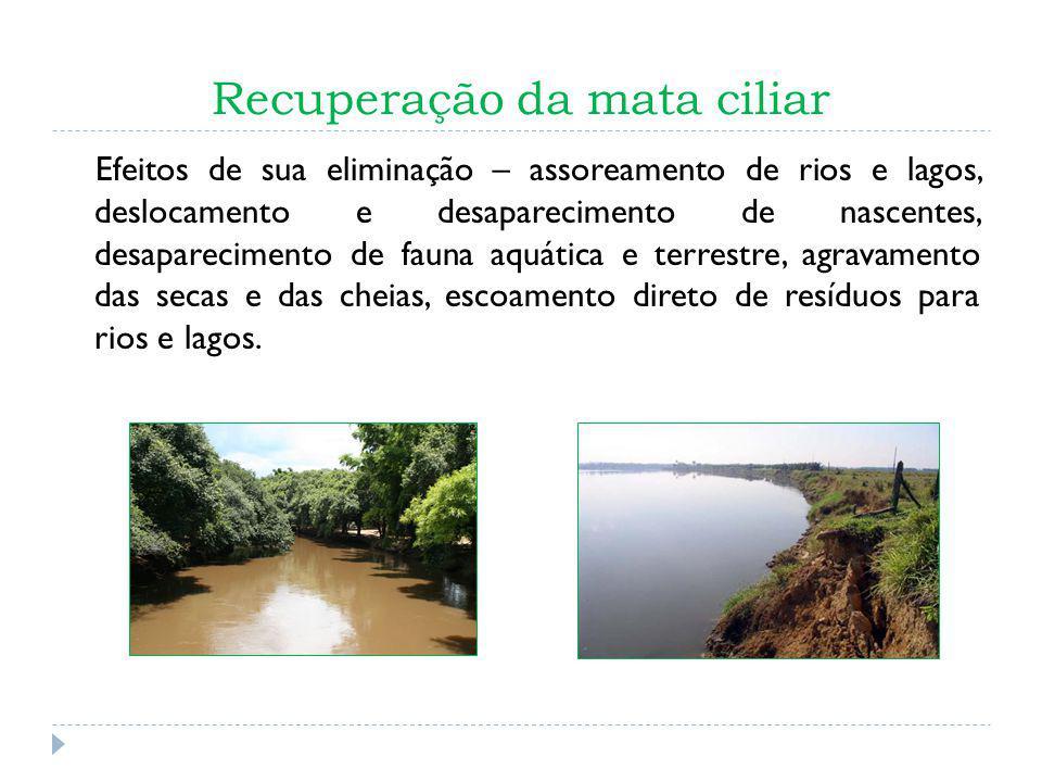 Recuperação da mata ciliar Efeitos de sua eliminação – assoreamento de rios e lagos, deslocamento e desaparecimento de nascentes, desaparecimento de f