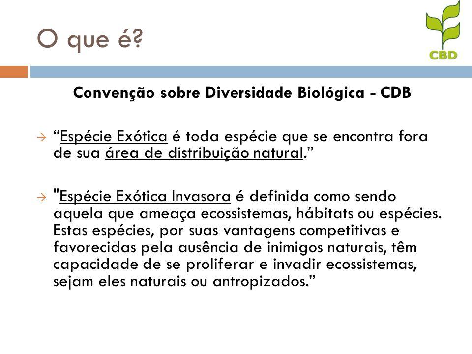O que é? Convenção sobre Diversidade Biológica - CDB Espécie Exótica é toda espécie que se encontra fora de sua área de distribuição natural.
