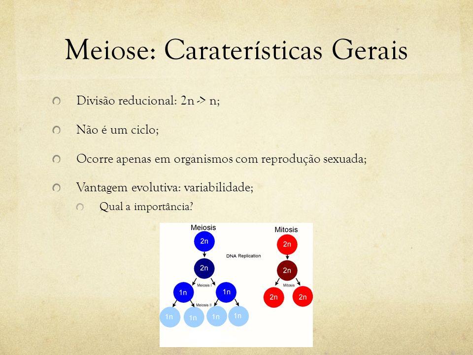 Meiose: Caraterísticas Gerais Duas divisões celulares consecutivas: A primeira reduz o número de cromossomos (cromossomos homólogos); A segunda mantém o número de cromossomos (cromátides irmãs); Produção de quatro células-filhas; Processo mais lento que a mitose, podendo durar anos.