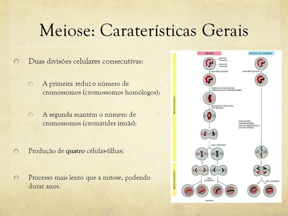 Meiose: Caraterísticas Gerais Duas divisões celulares consecutivas: A primeira reduz o número de cromossomos (cromossomos homólogos); A segunda mantém