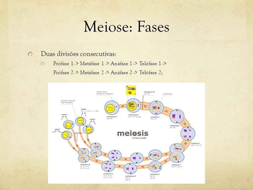 Meiose: Fases Duas divisões consecutivas: Prófase 1 -> Metáfase 1 -> Anáfase 1 -> Telófase 1 -> Prófase 2 -> Metáfase 2 -> Anáfase 2 -> Telófase 2;