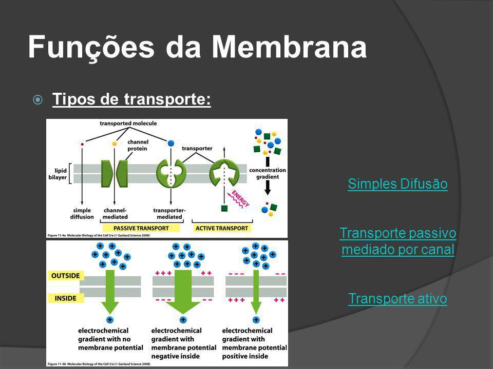 Funções da Membrana Tipos de transporte: Simples Difusão Transporte passivo mediado por canal Transporte ativo