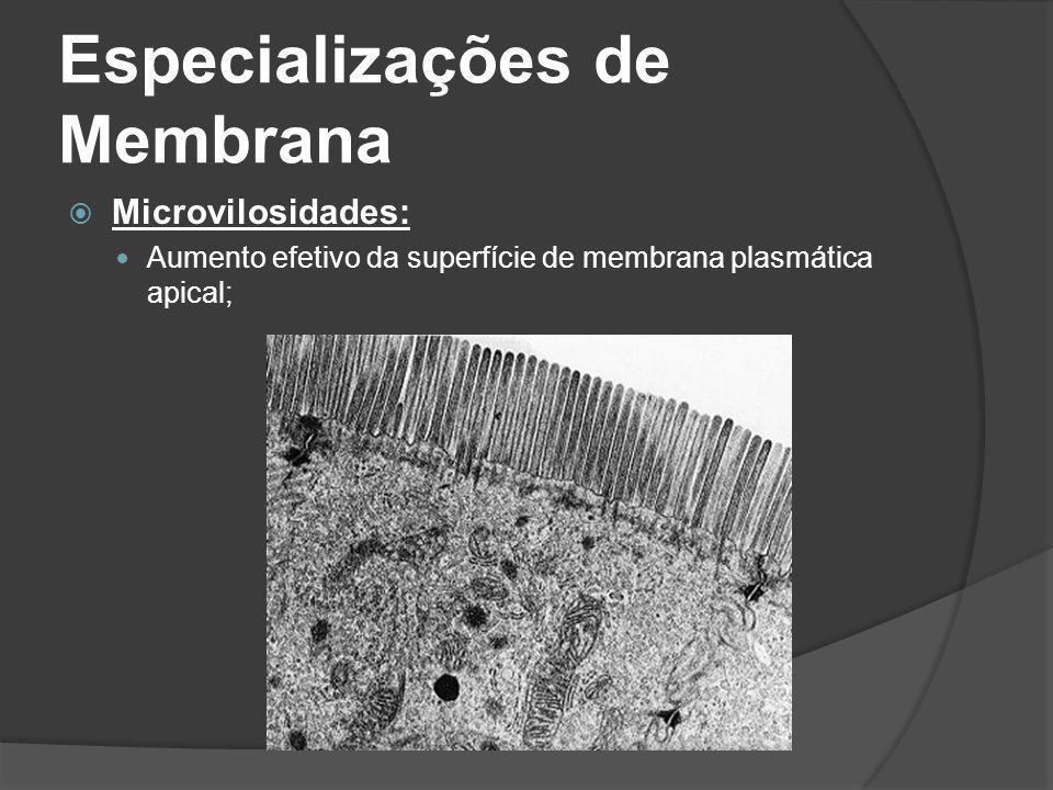 Especializações de Membrana Microvilosidades: Aumento efetivo da superfície de membrana plasmática apical;