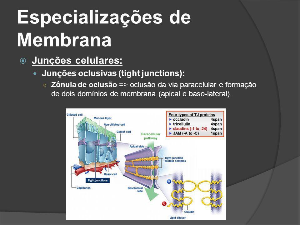 Especializações de Membrana Junções celulares: Junções oclusivas (tight junctions): Zônula de oclusão => oclusão da via paracelular e formação de dois
