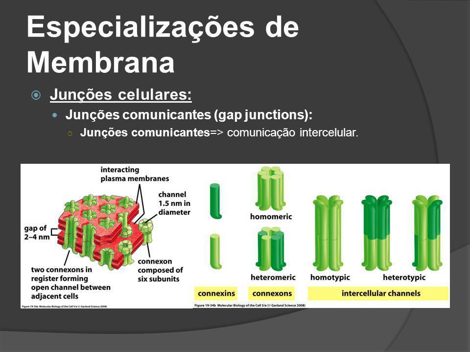 Especializações de Membrana Junções celulares: Junções comunicantes (gap junctions): Junções comunicantes=> comunicação intercelular.