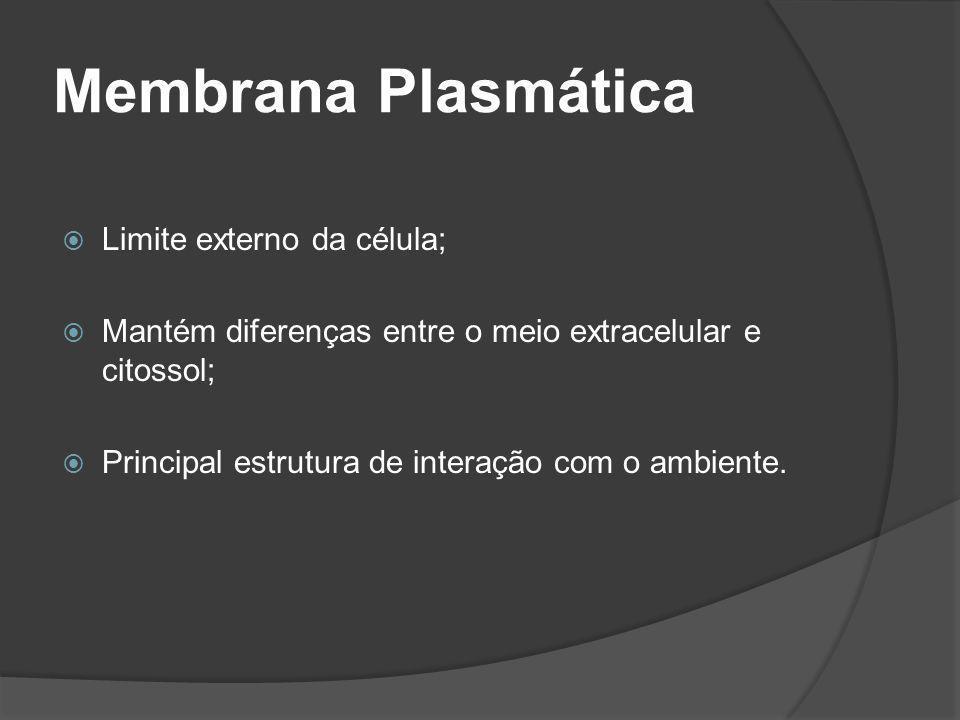 Membrana Plasmática Limite externo da célula; Mantém diferenças entre o meio extracelular e citossol; Principal estrutura de interação com o ambiente.