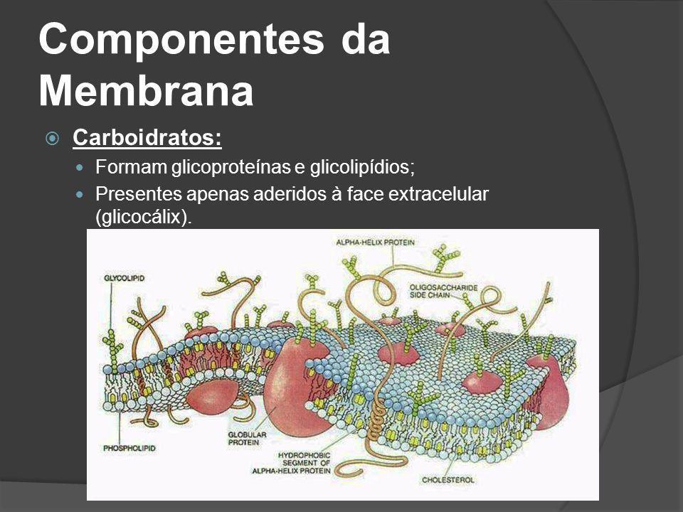 Componentes da Membrana Carboidratos: Formam glicoproteínas e glicolipídios; Presentes apenas aderidos à face extracelular (glicocálix).