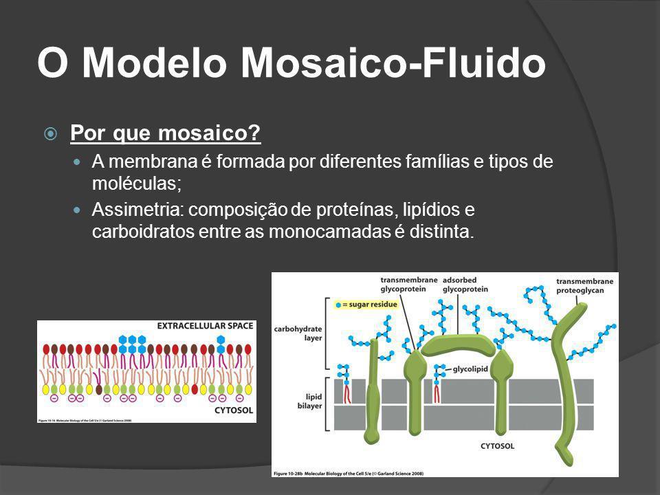 O Modelo Mosaico-Fluido Por que mosaico? A membrana é formada por diferentes famílias e tipos de moléculas; Assimetria: composição de proteínas, lipíd