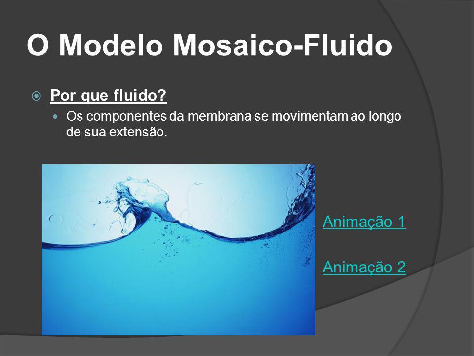 O Modelo Mosaico-Fluido Por que fluido? Os componentes da membrana se movimentam ao longo de sua extensão. Animação 1 Animação 2