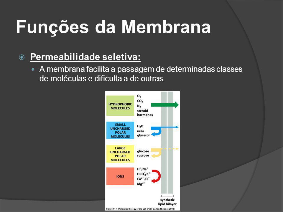 Funções da Membrana Permeabilidade seletiva: A membrana facilita a passagem de determinadas classes de moléculas e dificulta a de outras.