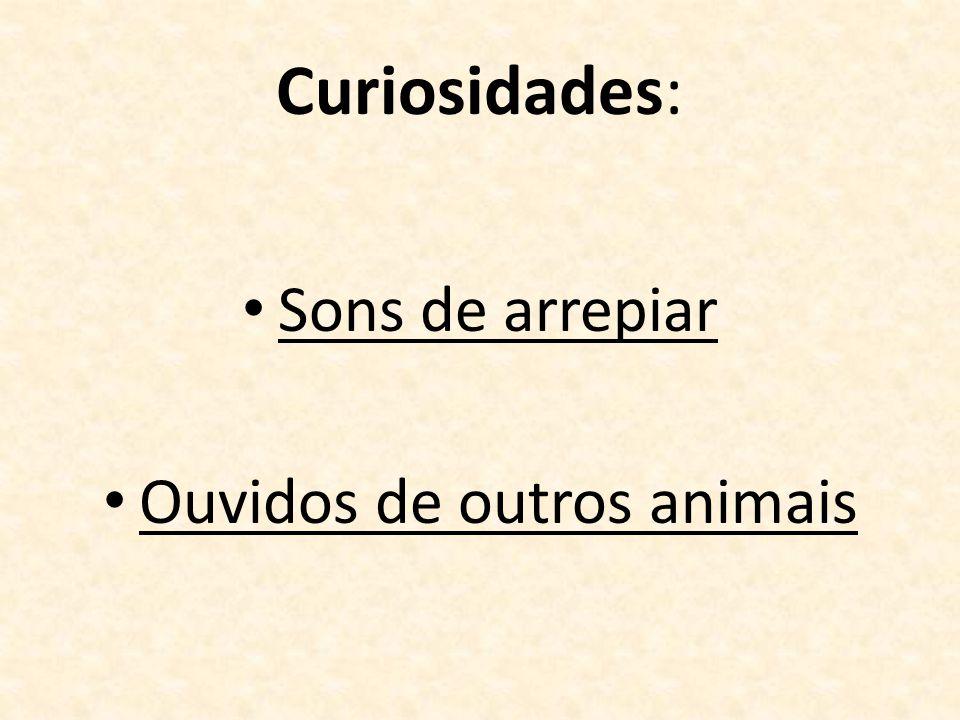 Curiosidades: Sons de arrepiar Ouvidos de outros animais
