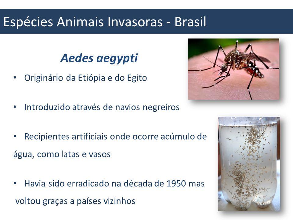 Espécies Animais Invasoras - Brasil Aedes aegypti e a DENGUE Transmissor da Dengue e Febre Amarela Grandes impactos na saúde e população humana Brasil / 2013: foram notificados 204.650 casos no país sendo 324 graves e 33 óbitos Macau (China): Em torno de 14 mil casos em 2005, e mais de 9 mil em 2013