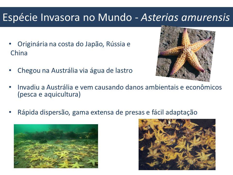 Espécie Invasora no Mundo - Asterias amurensis 42% da destruição dos corais pela presença da espécie invasora Se erradicada as estrelas do mar, os corais ainda teriam que se adaptar as mudanças climáticas