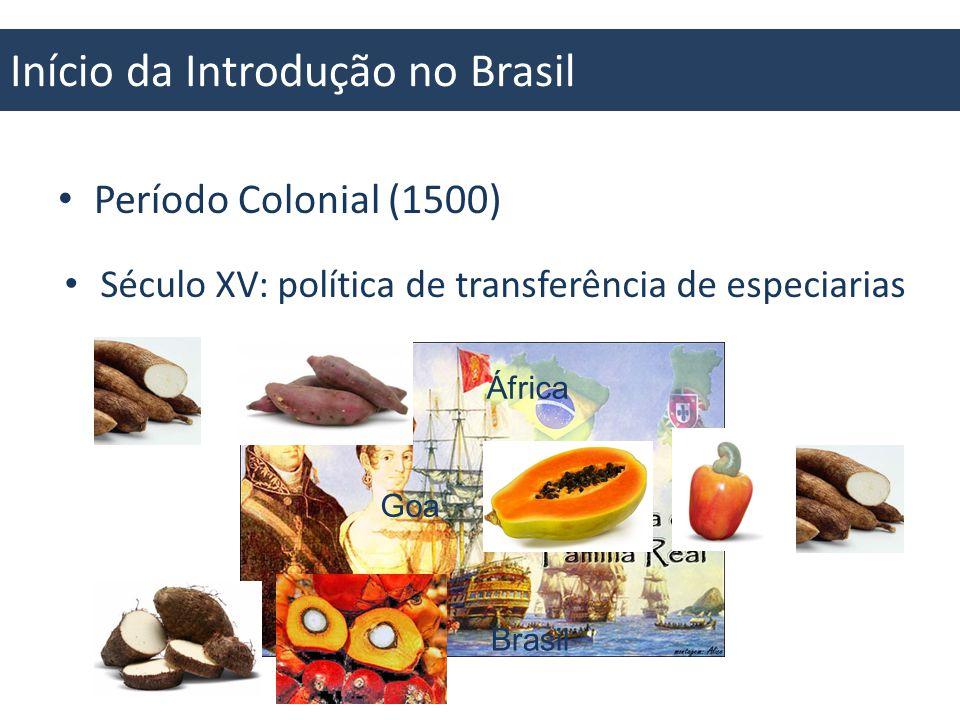 Capim Colonião Início da Introdução no Brasil Século XVIII: Intercâmbio de espécies Pau Brasil Cacau Cochonilha