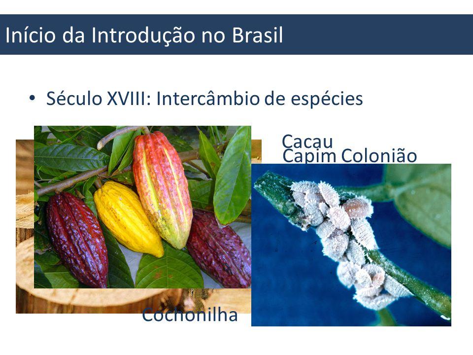 Início da Introdução no Brasil 1727: Café 1825: Eucalipto 1882: Soja 1880: Pinus 1850: Cana Fonte: Brasil Agrícola