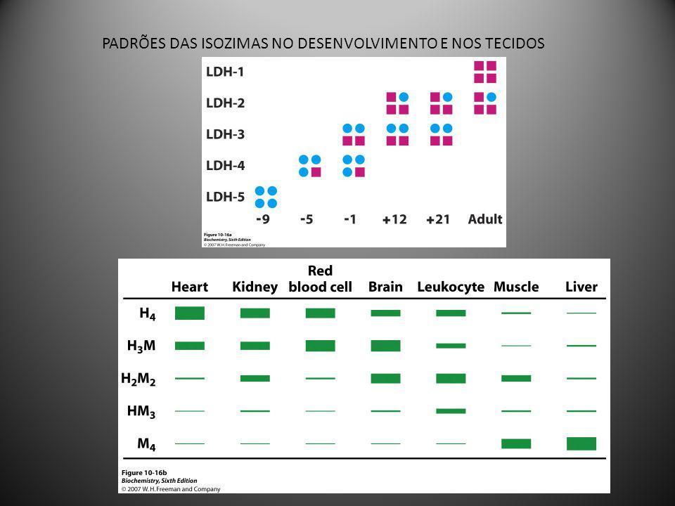 MODIFICAÇÃO COVALENTE FOSFORILAÇÃO: Proteínas quinases: catalisam a adição de um grupo fosfato a um resíduo de Ser, Thr ou Tyr.