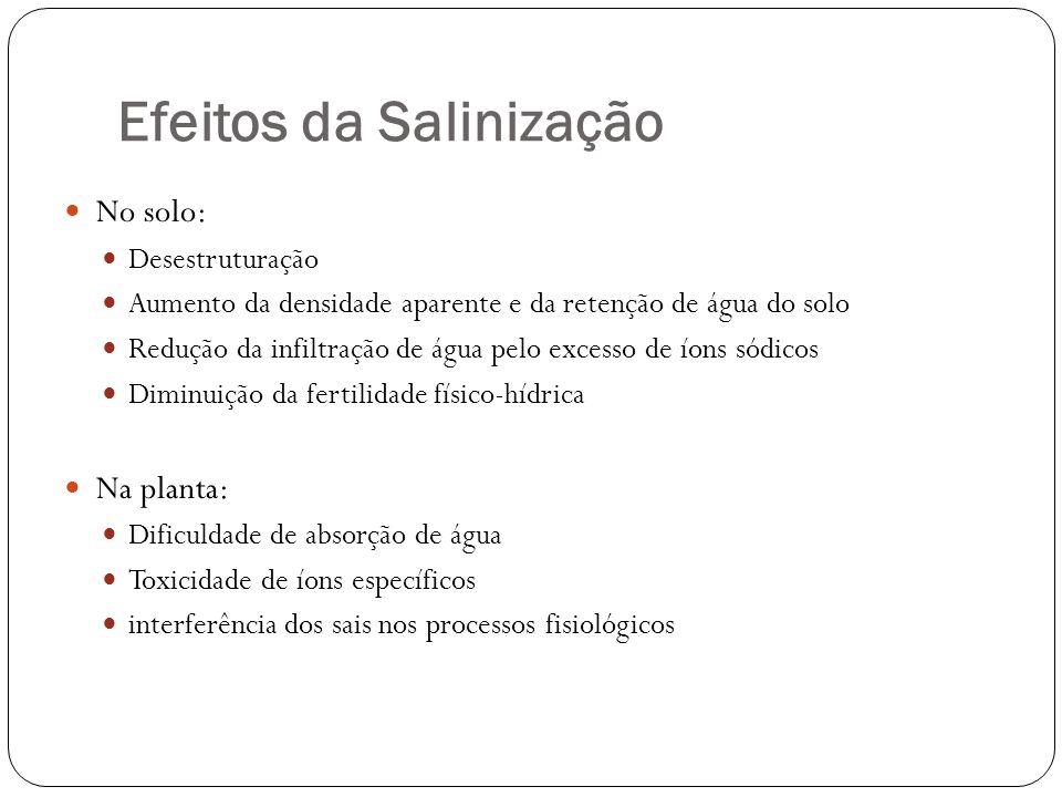 Efeitos da Salinização No solo: Desestruturação Aumento da densidade aparente e da retenção de água do solo Redução da infiltração de água pelo excess