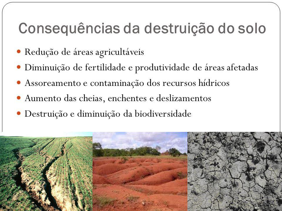 Consequências da destruição do solo Redução de áreas agricultáveis Diminuição de fertilidade e produtividade de áreas afetadas Assoreamento e contamin