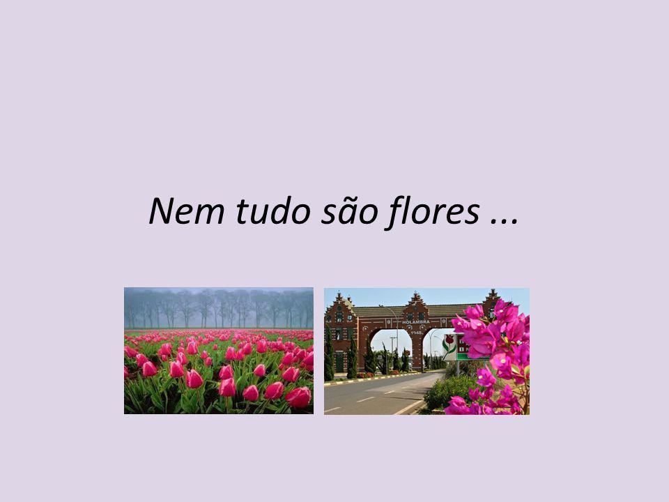 Nem tudo são flores...