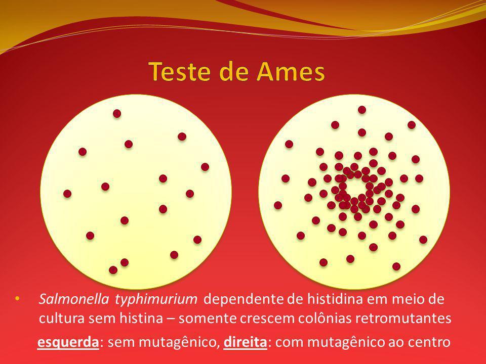 Salmonella typhimurium dependente de histidina em meio de cultura sem histina – somente crescem colônias retromutantes esquerda: sem mutagênico, direita: com mutagênico ao centro