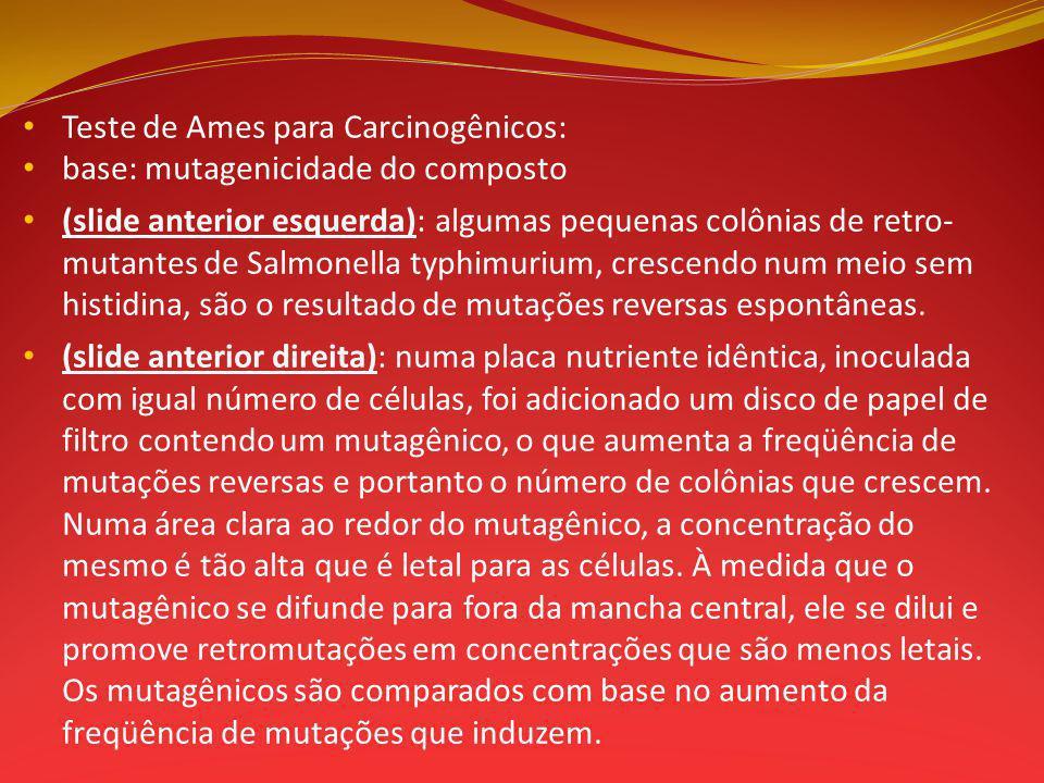 Teste de Ames para Carcinogênicos: base: mutagenicidade do composto (slide anterior esquerda): algumas pequenas colônias de retro- mutantes de Salmonella typhimurium, crescendo num meio sem histidina, são o resultado de mutações reversas espontâneas.