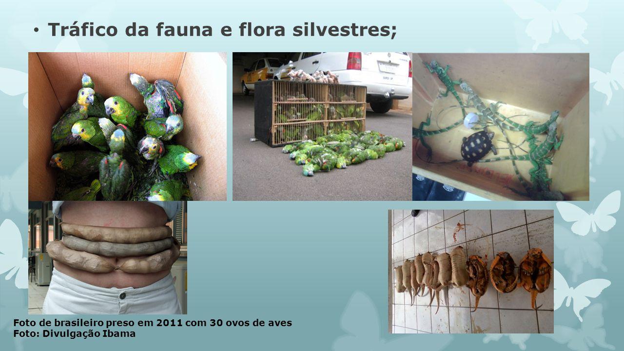 Foto de brasileiro preso em 2011 com 30 ovos de aves Foto: Divulgação Ibama Tráfico da fauna e flora silvestres;