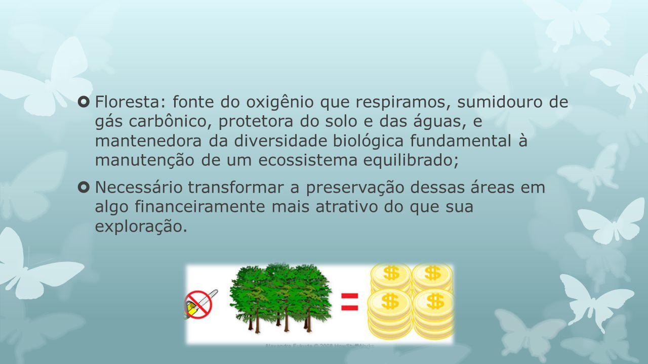 Floresta: fonte do oxigênio que respiramos, sumidouro de gás carbônico, protetora do solo e das águas, e mantenedora da diversidade biológica fundamen