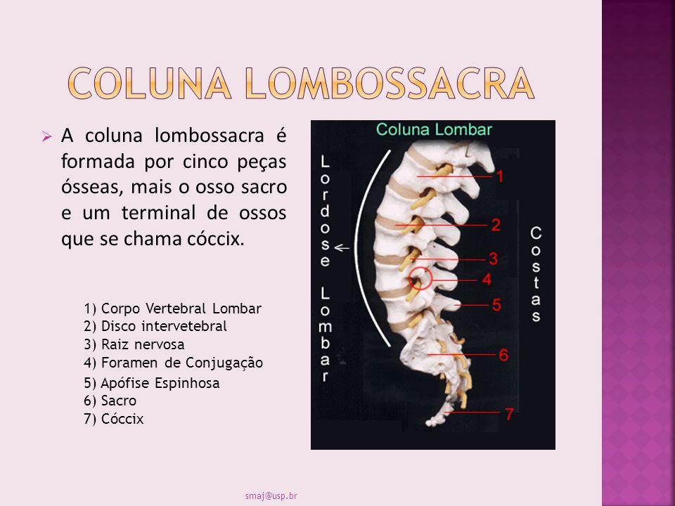 A coluna lombossacra é formada por cinco peças ósseas, mais o osso sacro e um terminal de ossos que se chama cóccix. 1) Corpo Vertebral Lombar 2) Disc