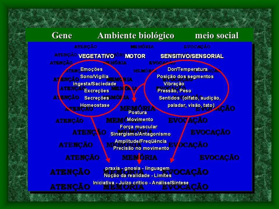 Gene Ambiente biológico meio social Gene Ambiente biológico meio social