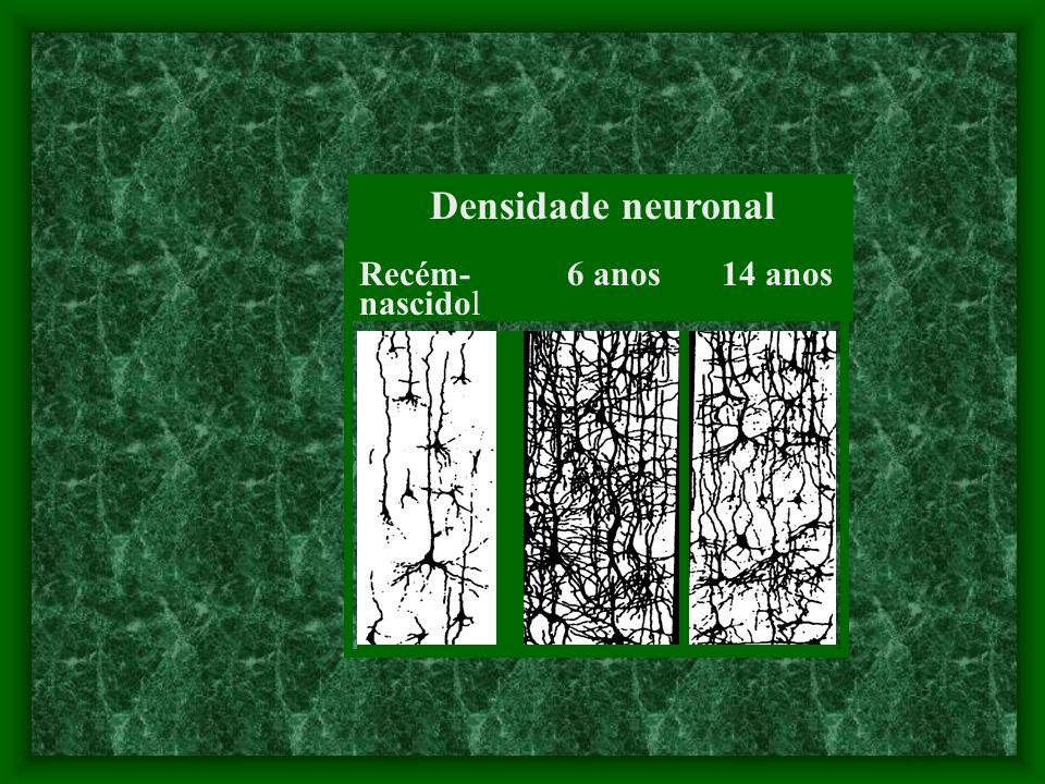 Densidade neuronal Recém- 6 anos 14 anos nascidol