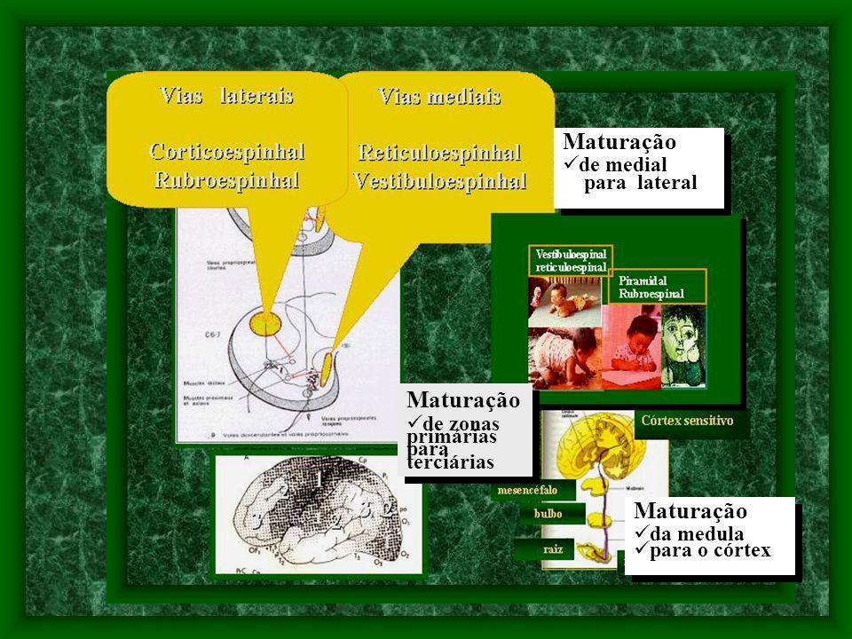 Maturação da medula para o córtex Maturação da medula para o córtex Maturação de zonas primárias para terciárias Maturação de zonas primárias para terciárias Maturação de medial para lateral Maturação de medial para lateral