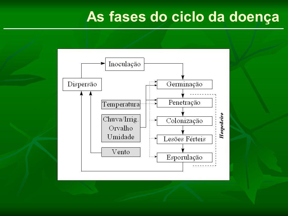 As fases do ciclo da doença