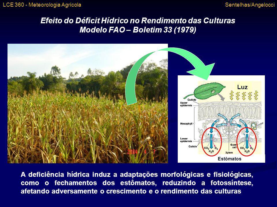 Efeito do Déficit Hídrico no Rendimento das Culturas Modelo FAO – Boletim 33 (1979) A deficiência hídrica induz a adaptações morfológicas e fisiológic