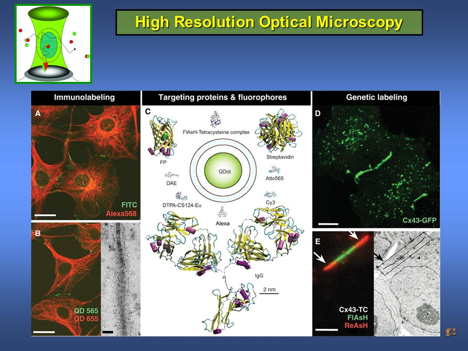 46 High Resolution Optical Microscopy