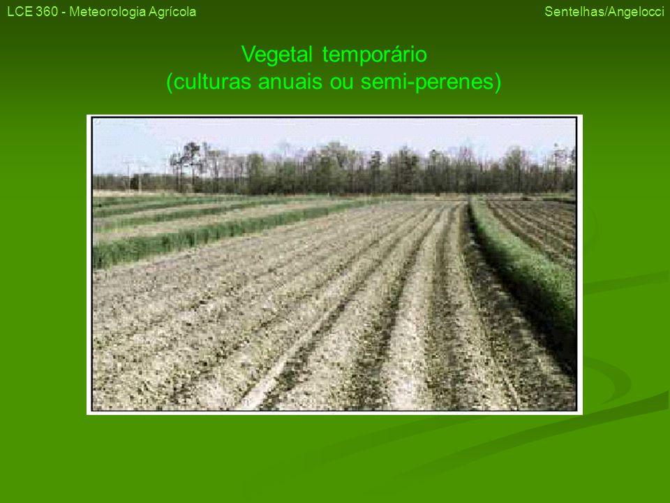 Vegetal temporário (culturas anuais ou semi-perenes) LCE 360 - Meteorologia Agrícola Sentelhas/Angelocci