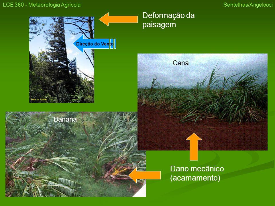 LCE 360 - Meteorologia Agrícola Sentelhas/Angelocci Dano mecânico em árvores