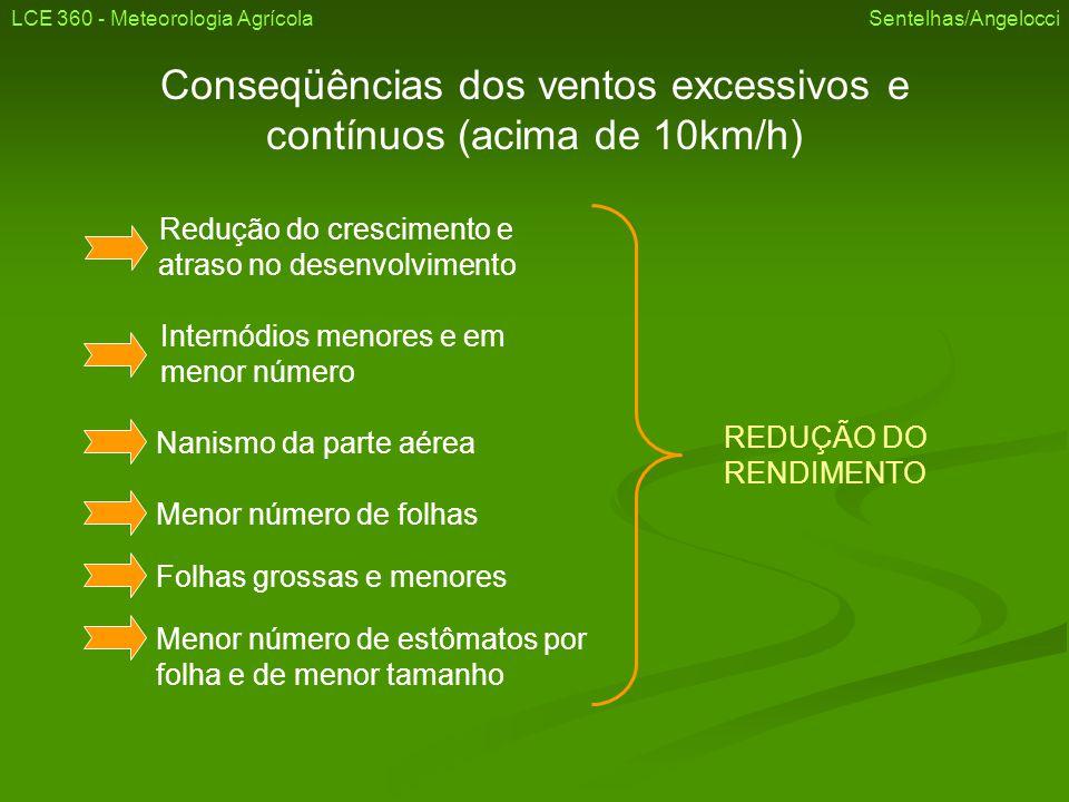 Conseqüências dos ventos excessivos e contínuos (acima de 10km/h) Redução do crescimento e atraso no desenvolvimento Internódios menores e em menor nú