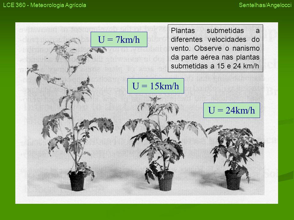 U = 7km/h U = 15km/h U = 24km/h LCE 360 - Meteorologia Agrícola Sentelhas/Angelocci Plantas submetidas a diferentes velocidades do vento. Observe o na