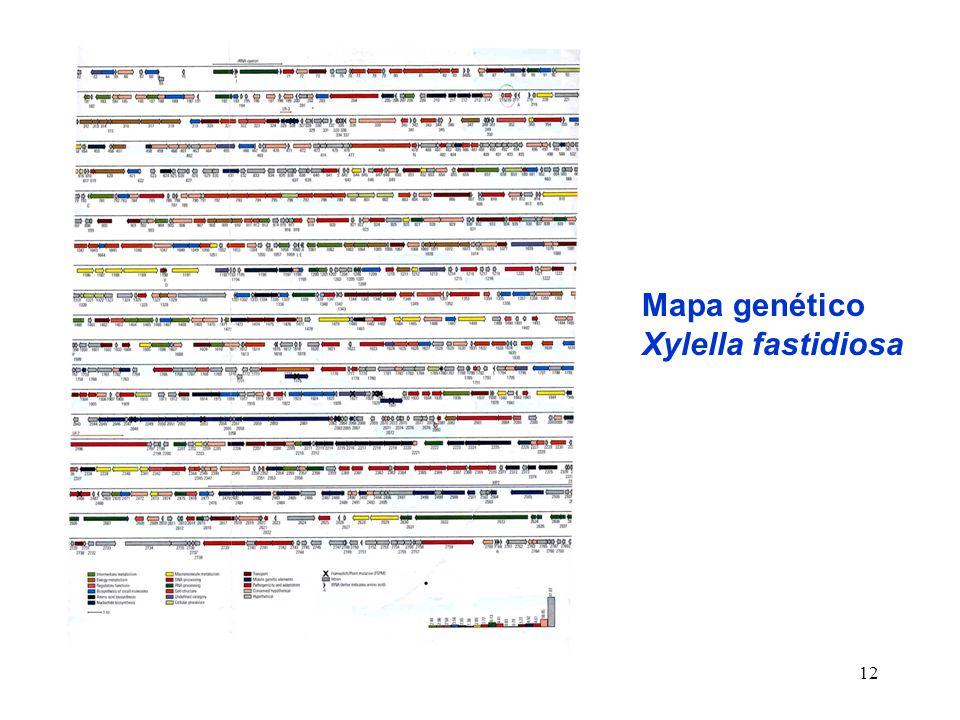12 Mapa genético Xylella fastidiosa