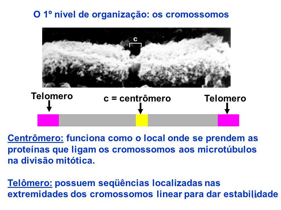 16 O 1º nível de organização: os cromossomos c = centrômero Telomero Centrômero: funciona como o local onde se prendem as proteínas que ligam os cromossomos aos microtúbulos na divisão mitótica.